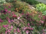 amishflowers